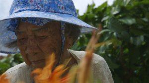 《綠色牢籠》影評 回顧了臺灣一段被遺忘的歷史