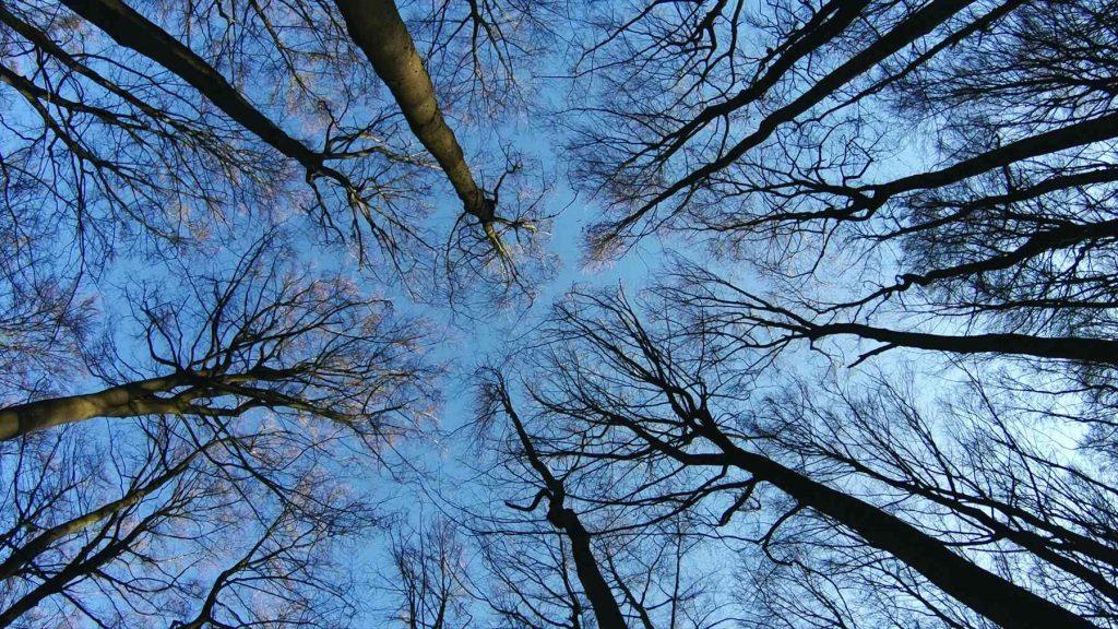 紀錄片the hidden life of trees 評價 關於我們的根和生命的循環紀錄片 02