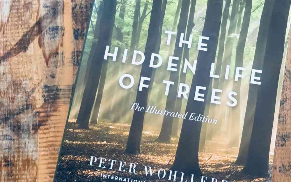 紀錄片the hidden life of trees 評價 關於我們的根和生命的循環紀錄片